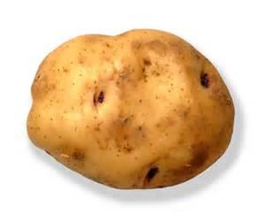 File:Potato 1.jpg