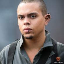 Messalla Mockingjay