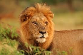 File:African Wildlife.jpg