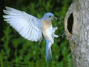 File:Beautiful Bird1.jpg