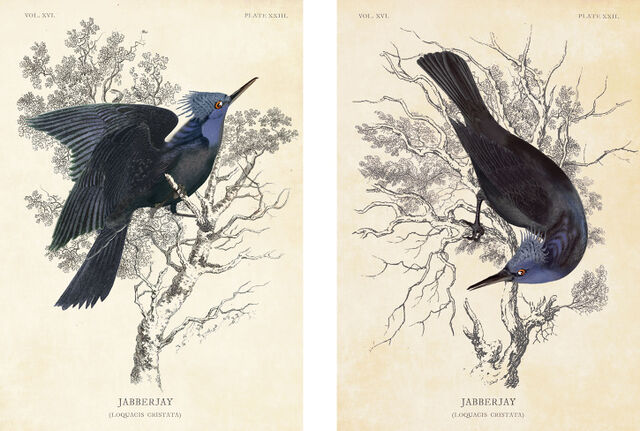 File:Jabberjays art.jpg
