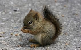 File:Cute Squirrel.jpg