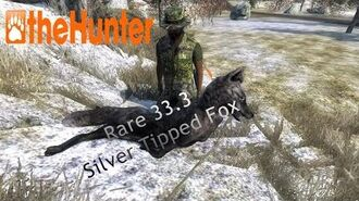TheHunter Silver Tipped Red Fox scoring 33.3 w Recurve