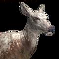 Red deer female piebald