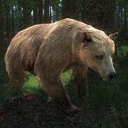 Bear blonde