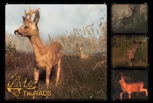 Species roe deer 700