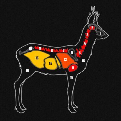 Roe deer organs