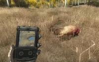 Tt elk carcass