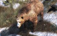 Brown bear 950