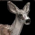 Mule deer female piebald