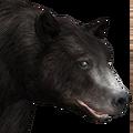 Black bear female common v1