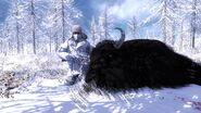 Violator31 melanistic bison