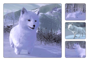 Species arctic fox