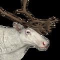 Reindeer male albino