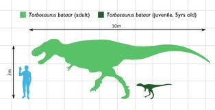 Tarbosaurus Theropods Wiki Fandom Powered By Wikia