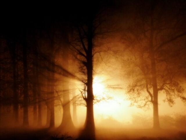 File:Ghost-fog-in-woods 1024x768 25597.jpg
