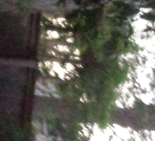 File:Slendy in backyard.jpg