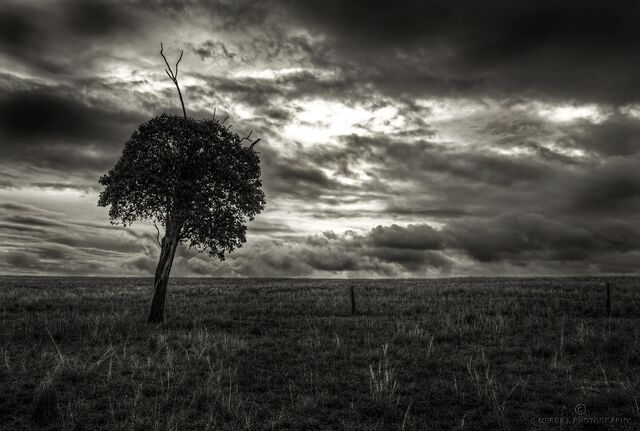 File:I'm alone as this lonely tree.jpg