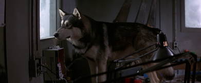 Norwegian dog stares out the window - The Thing (1982)