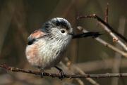 Birds.2011 665