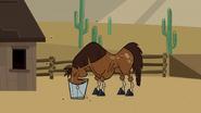 Horse310