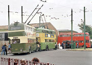 BCLM various trolleybuses