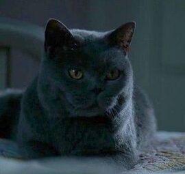 Sookie'sCat