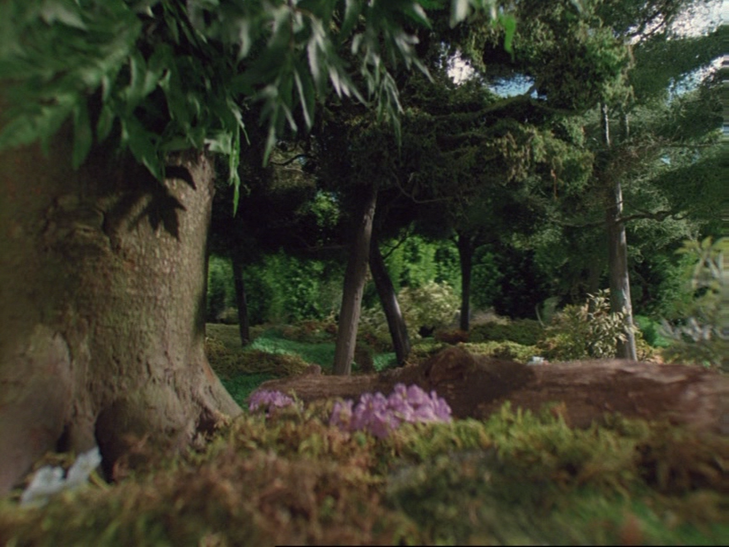 File:Henry'sForest59.png