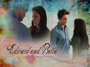 Wallpaper-Twilight-twilight-series-1871530-1024-768