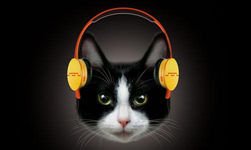 File:Cat headphones.jpg
