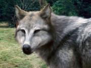 File:180px-Werewolves 11.jpg