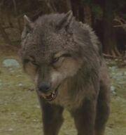 Paul Wolf