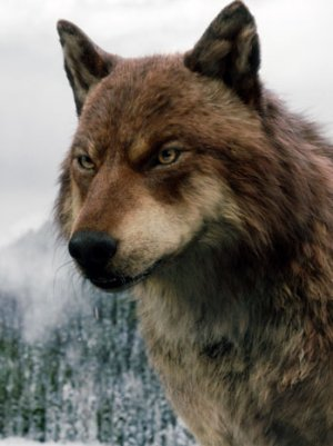 Jacob Black Wolf Form Breaking Dawn Part 2 Jacob s wolf form