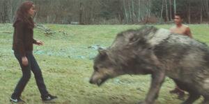 65 kristen stewart wolves new moon