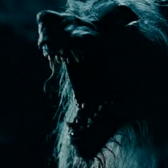 William, growling.