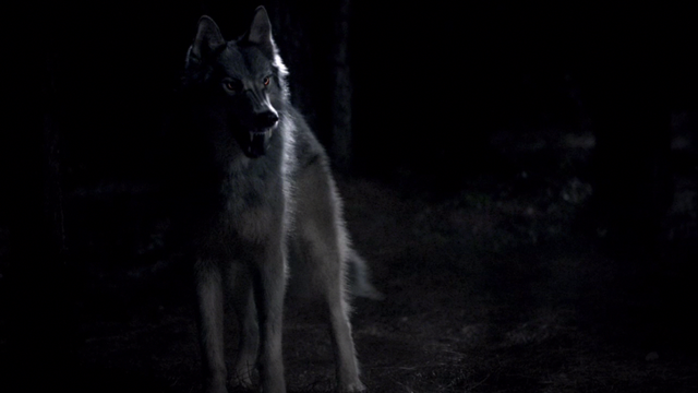 File:Werewolf1.png
