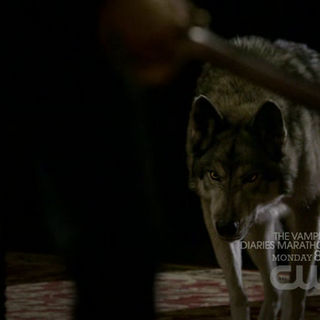 Jules coming for Damon.