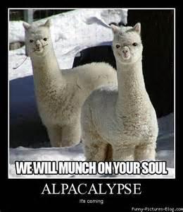 File:Alpaca pack.jpg