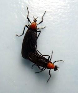 File:Lovebug-1.jpg