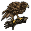 Trained Hawk.png