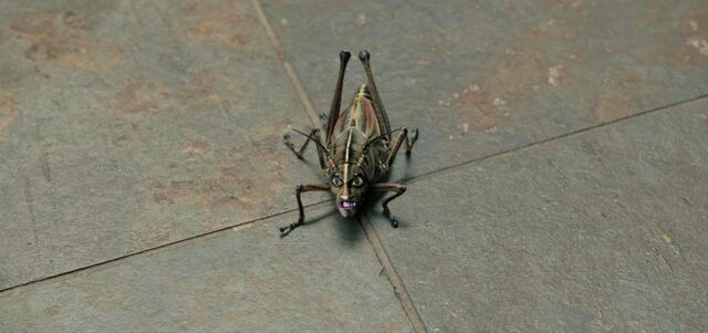 File:The Locust.jpg