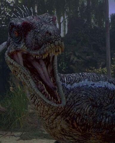File:Raptor (Jurassic Park III).JPG