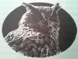 Eostra's eagle owl 4