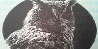 Eostra's Eagle Owl