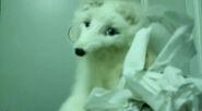 Toilet Paper Mr. Fox