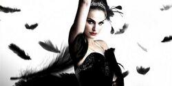 Black-swan-black-poster