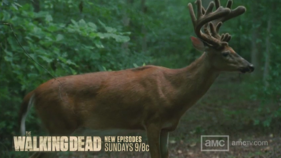 File:Walking dead 3 deer.png