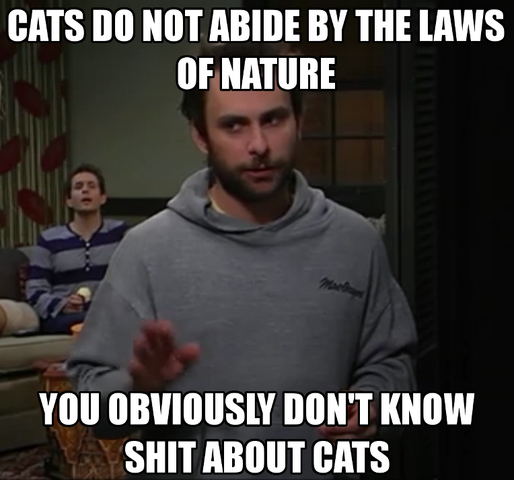 File:Dont know shit aboot cats.png