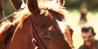 Chase (Animal)