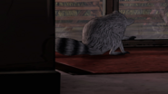AmTR Raccoon